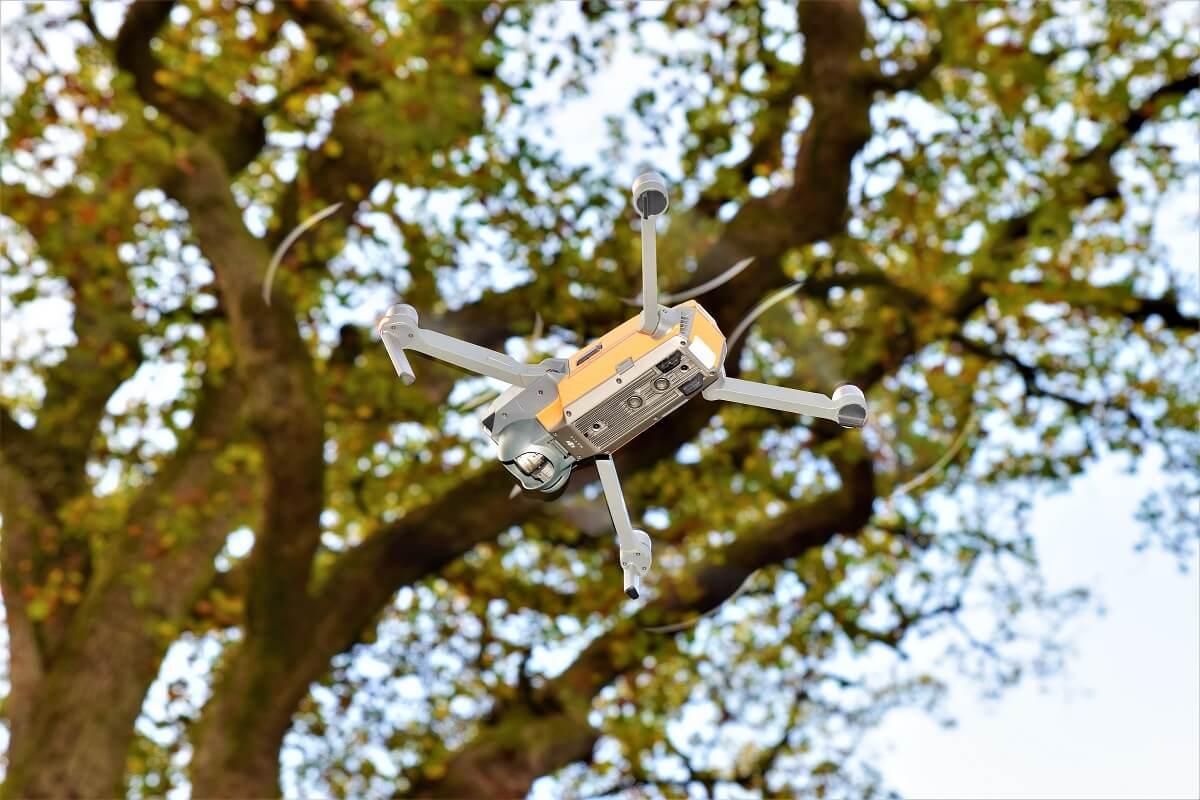 Wo es erlaubt ist: Baumkontrolle mit der Hilfe einer Drohne.